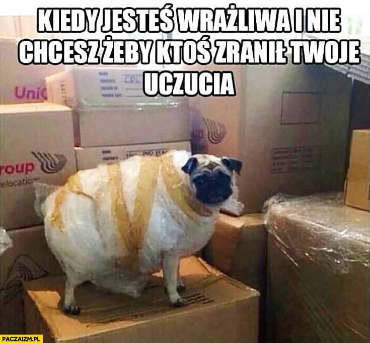 Kiedy jesteś wrażliwa i nie chcesz żeby ktoś zranił Twoje uczucia pies mops owinięty folią bąbelkową