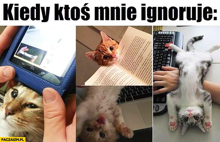 Kiedy ktoś mnie ignoruje koty kotki przeszkadzają w pracy