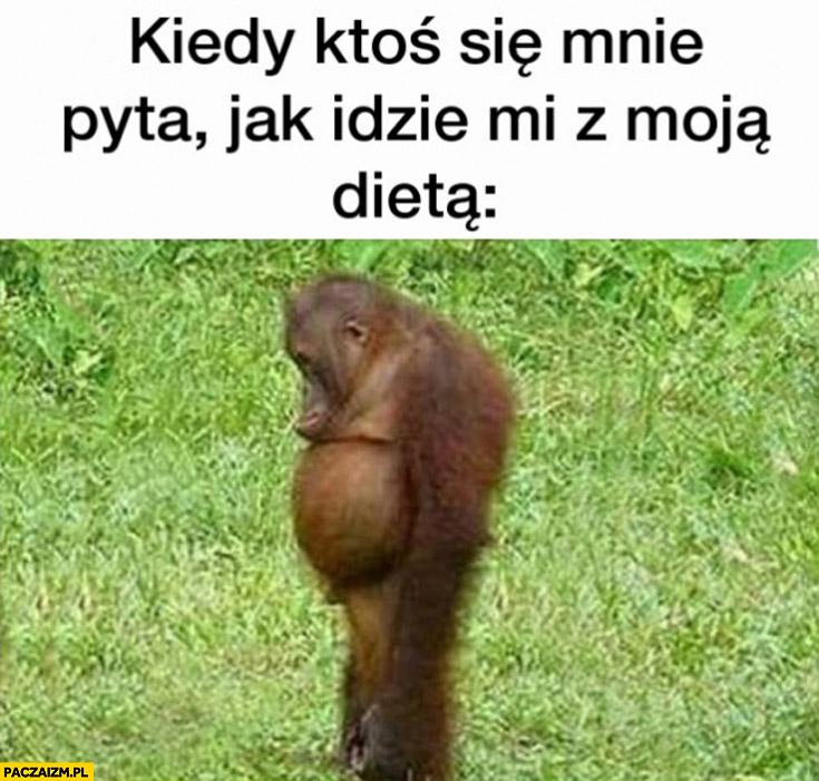 Kiedy ktoś się mnie pyta jak mi idzie z moją dieta Kamil smutna małpa goryl