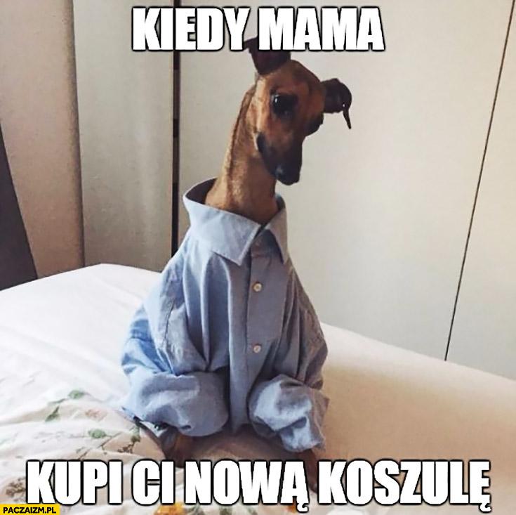Kiedy mama kupi Ci nową koszulę pies za duża koszula