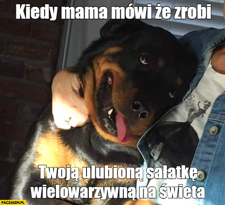 Kiedy mama mówi, że zrobi Twoją ulubioną sałatkę wielowarzywną na święta szczęśliwy zadowolony pies