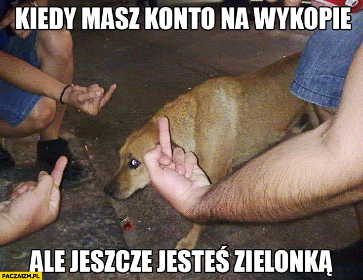 Kiedy masz konto na wykopie ale jeszcze jesteś zielonką smutny pies