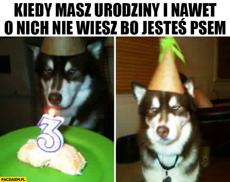 Kiedy masz urodziny i nawet o nich nie wiesz bo jesteś psem