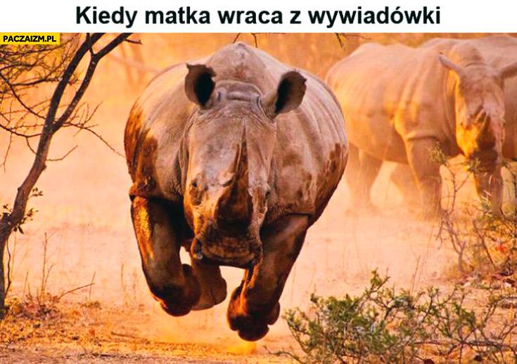 Kiedy matka wraca z wywiadówki nosorożec