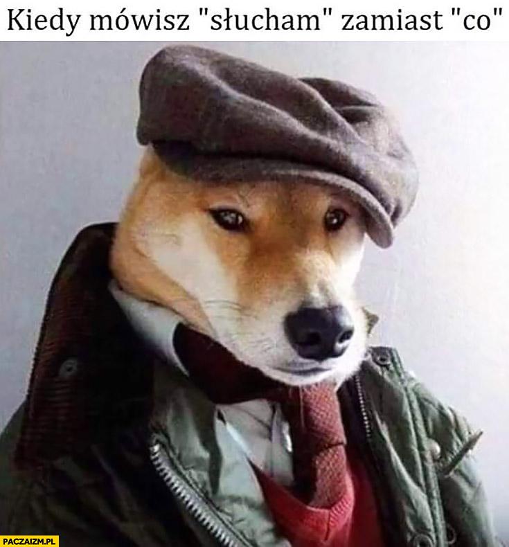 Kiedy mówisz słucham zamiast co pies pieseł w kaszkiecie kapeluszu