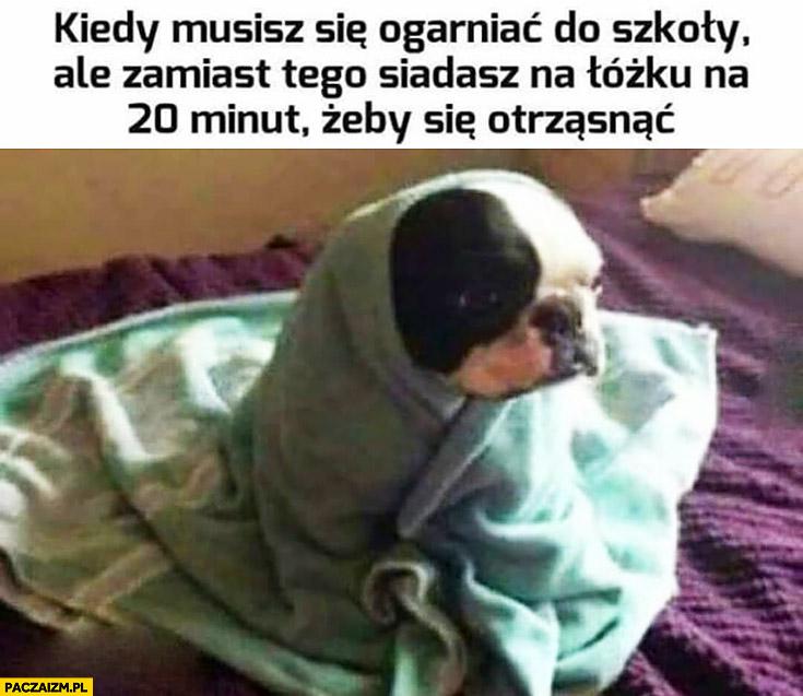 Kiedy musisz się ogarniać do szkoły ale zamiast tego siadasz na łóżku 20 minut żeby się otrząsnąć pies owinięty pościelą