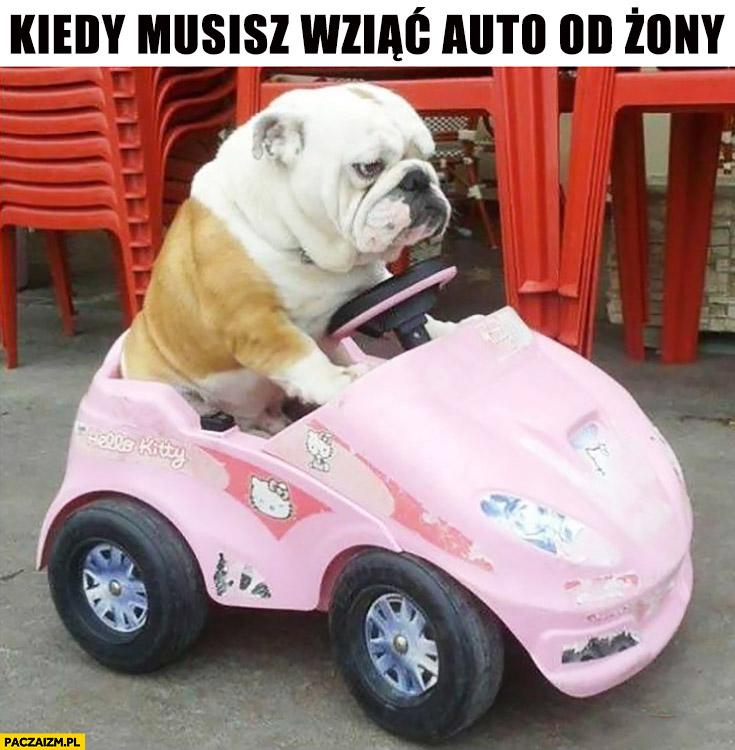 Kiedy musisz wziąć auto żony smutny pies buldog