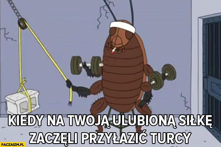 Kiedy na Twoją ulubiona siłkę zaczęli przyłazić Turcy karaluch