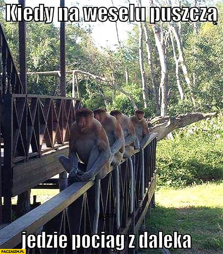 Kiedy na weselu puszczą jedzie pociąg z daleka typowy Polak nosacz małpa