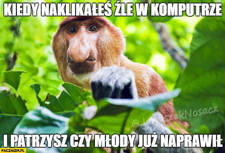 Kiedy naklikałeś źle w komputerze i patrzysz czy młody już naprawił typowy Polak nosacz małpa