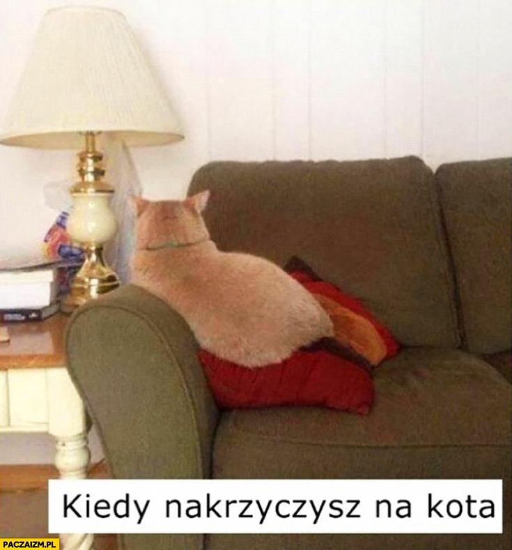 Kiedy nakrzyczysz na kota foch