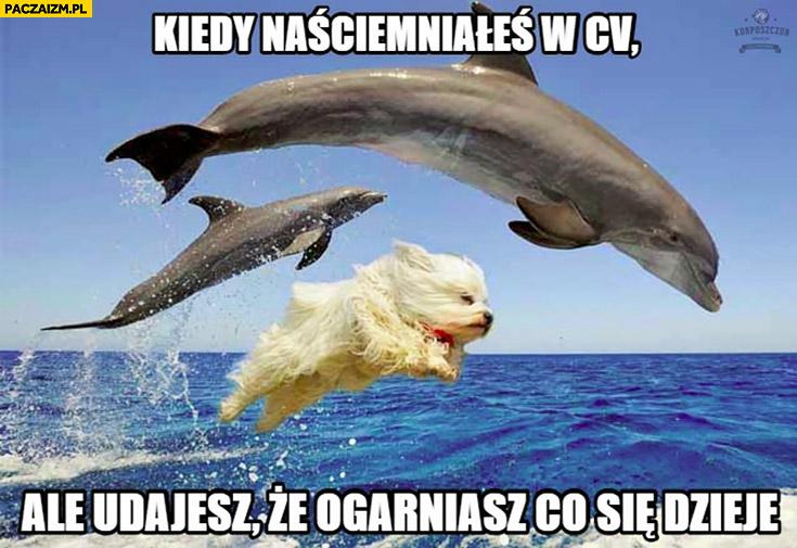 Kiedy naściemniałeś w CV ale udajesz, że ogarniasz co się dzieje pies delfiny