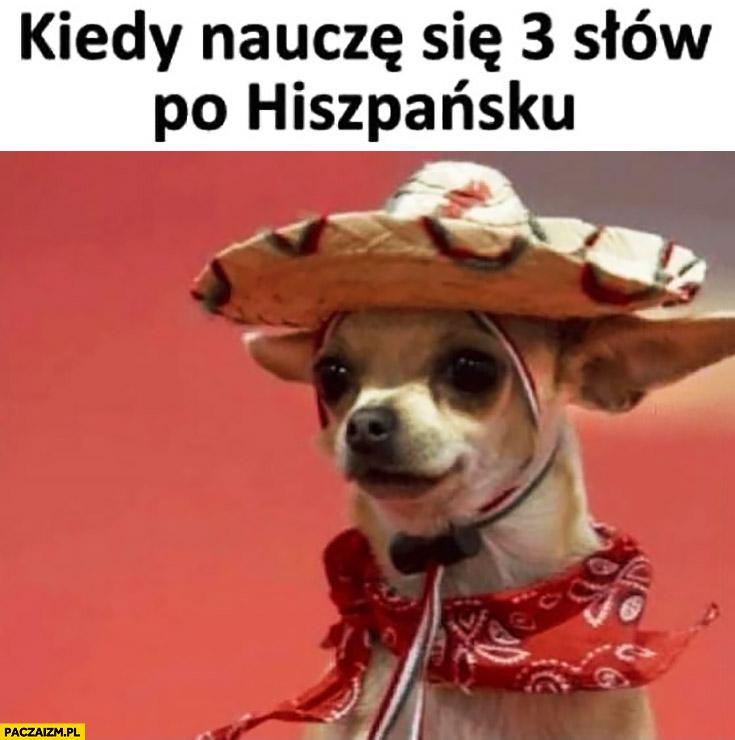 Kiedy nauczę się 3 słów po Hiszpańsku pies piesek przebrany za Hiszpana