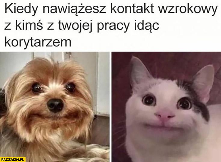 Kiedy nawiążesz kontakt wzrokowy z kimś z Twojej pracy idąc korytarze kot pies śmieszna mina