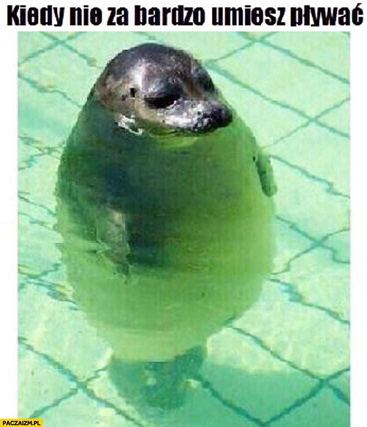 Kiedy nie za bardzo umiesz pływać gruba foka