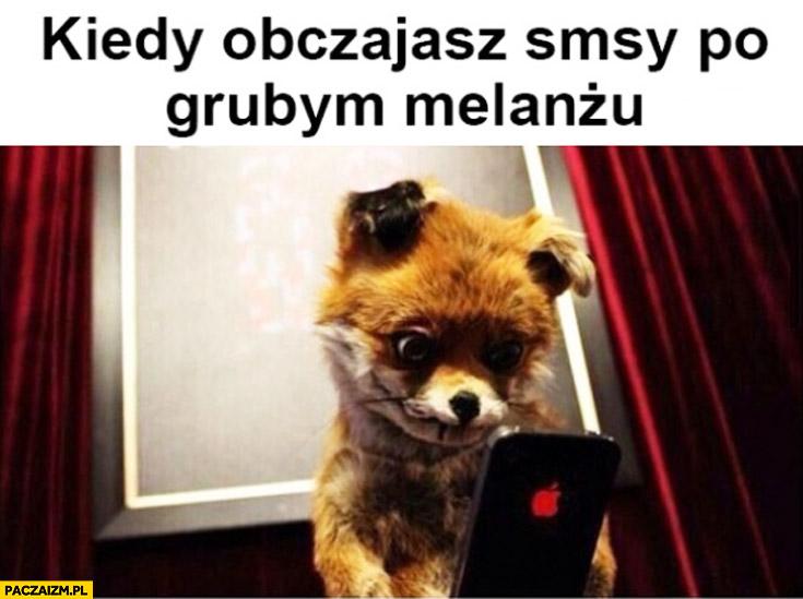 Kiedy obczajasz SMSy po grubym melanżu lis