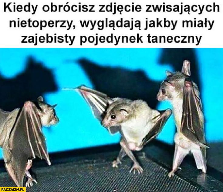 Kiedy obrócisz zdjęcie zwisających nietoperzy wyglądają jakby miały zarąbisty pojedynek taneczny