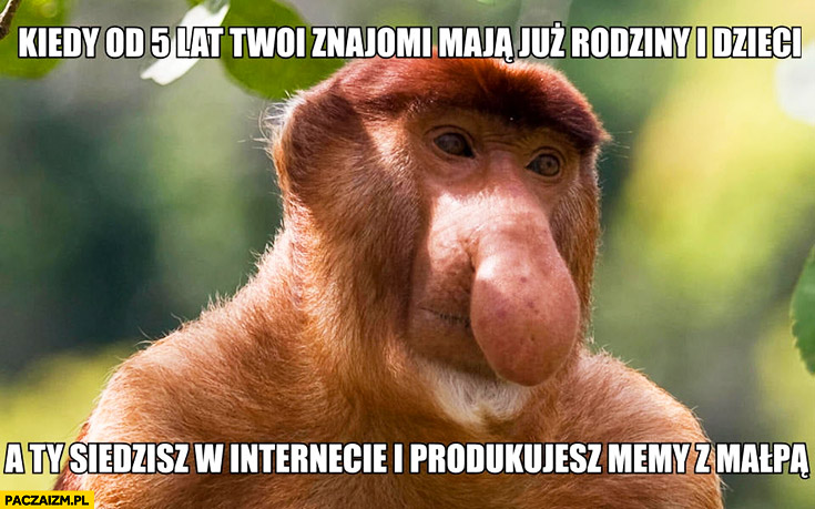 Kiedy od 5 lat Twoi znajomi maja już rodziny i dzieci a Ty siedzisz w internecie i produkujesz memy z małpą typowy Polak nosacz małpa