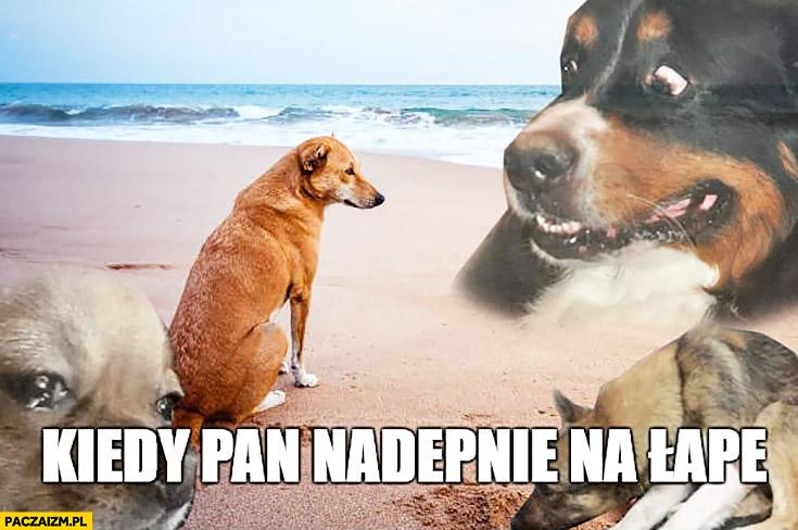 Kiedy pan nadepnie na łapę smutny pies łup