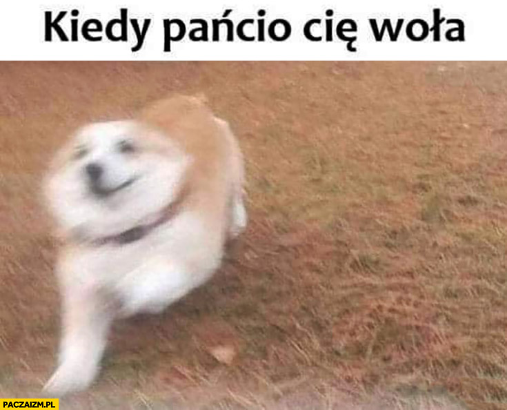 Kiedy pańcio Cię woła pies biegnie
