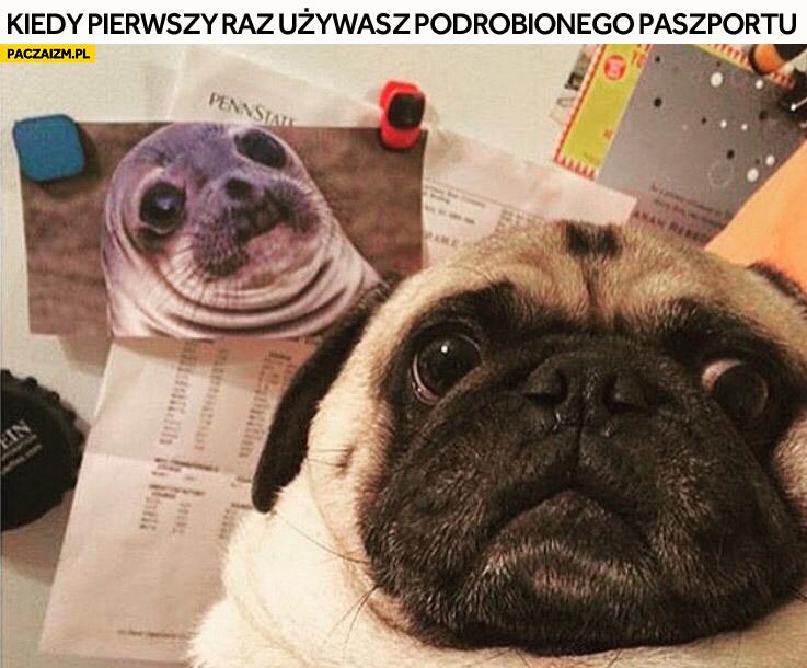 Kiedy pierwszy raz używasz podrobionego paszportu pies foka mem