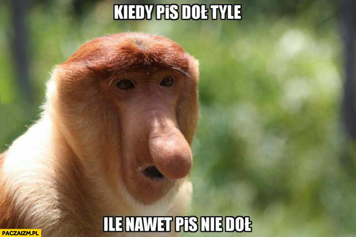 Kiedy PiS doł tyle ile nawet PiS nie doł małpa Polak nosacz