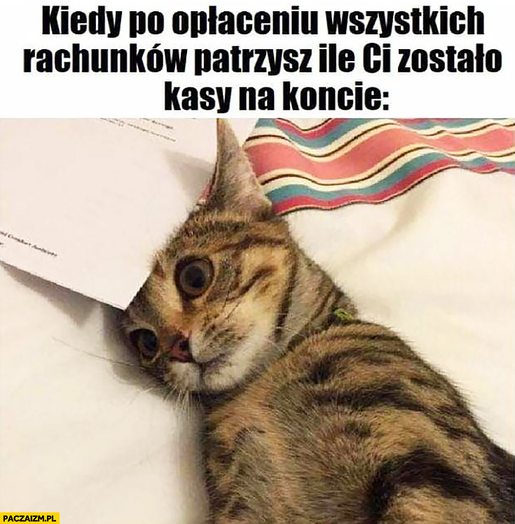 Kiedy po opłaceniu wszystkich rachunków parzysz ile Ci zostało na koncie smutny kot