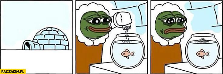 Kiedy próbujesz nakarmić rybki na Antarktydzie w igloo smutna żaba komiks