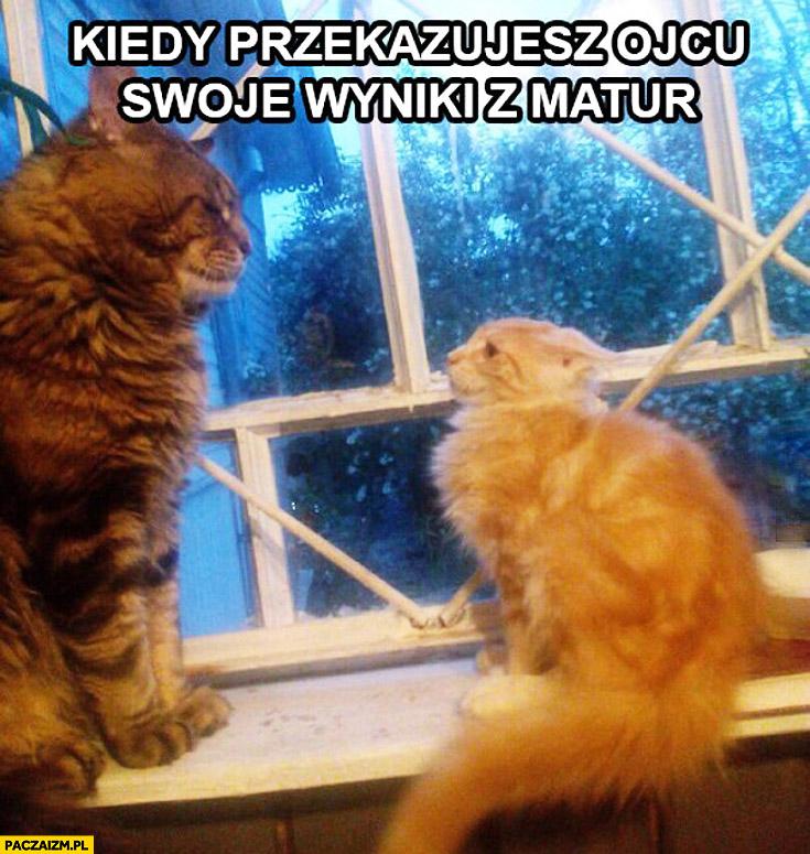 Kiedy przekazujesz ojcu swoje wyniki z matur przestraszony kot