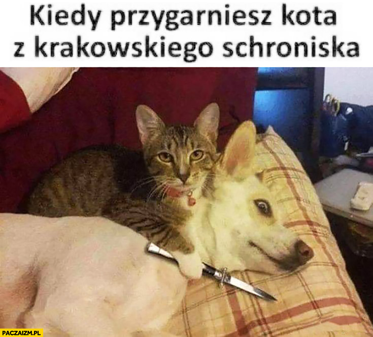 Kiedy przygarniesz kota z krakowskiego schroniska z nożem do psa