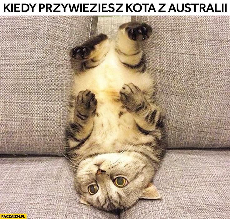 Kiedy przywieziesz kota z Australii