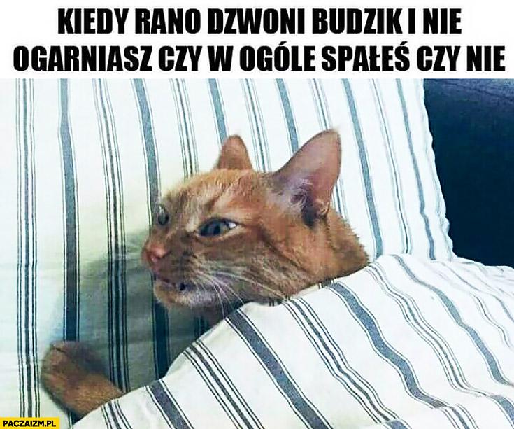 Kiedy rano dzwoni budzik i nie ogarniasz czy w ogóle spałeś czy nie kot