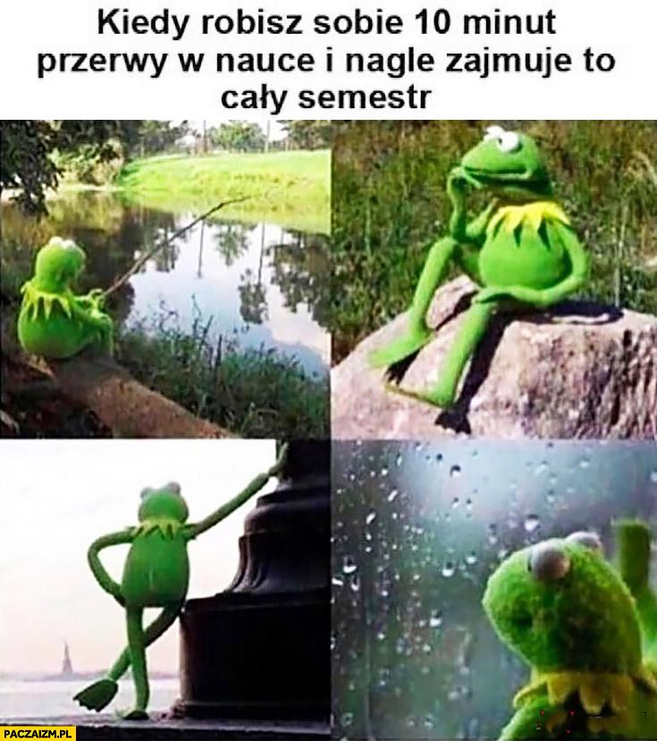Kiedy robisz sobie 10 minut przerwy w nauce i nagle zajmuje to cały semestr Kermit