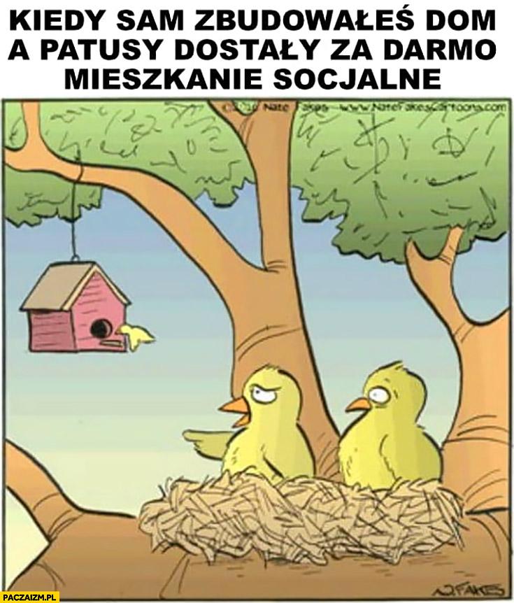 Kiedy sam zbudowałeś dom a patusy dostały za darmo mieszkanie socjalne ptaki gniazdo