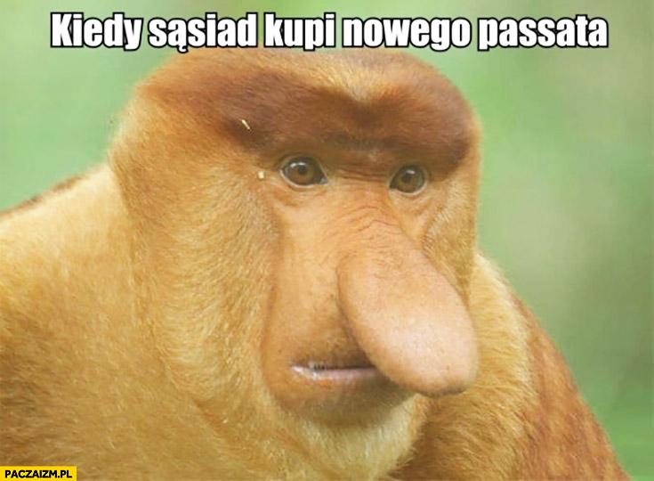 Kiedy sąsiad kupi nowego Passata wkurzona małpa