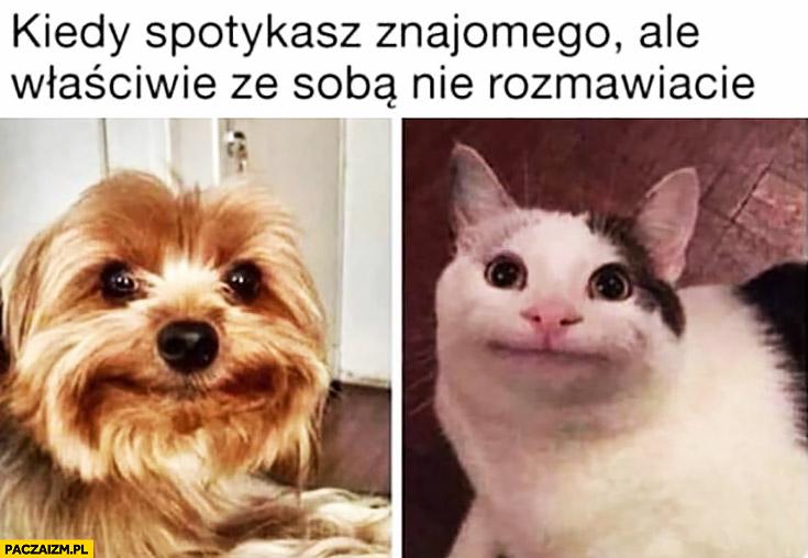 Kiedy spotykasz znajomego ale właściwie ze sobą nie rozmawiacie pies kot z głupią miną
