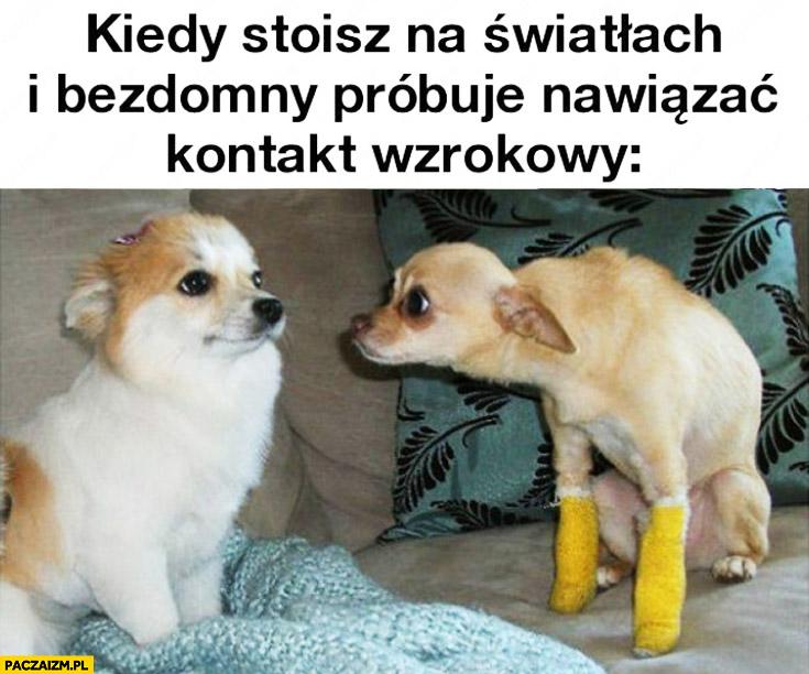 Kiedy stoisz na światłach i bezdomny próbuje nawiązać kontakt wzrokowy pies psy