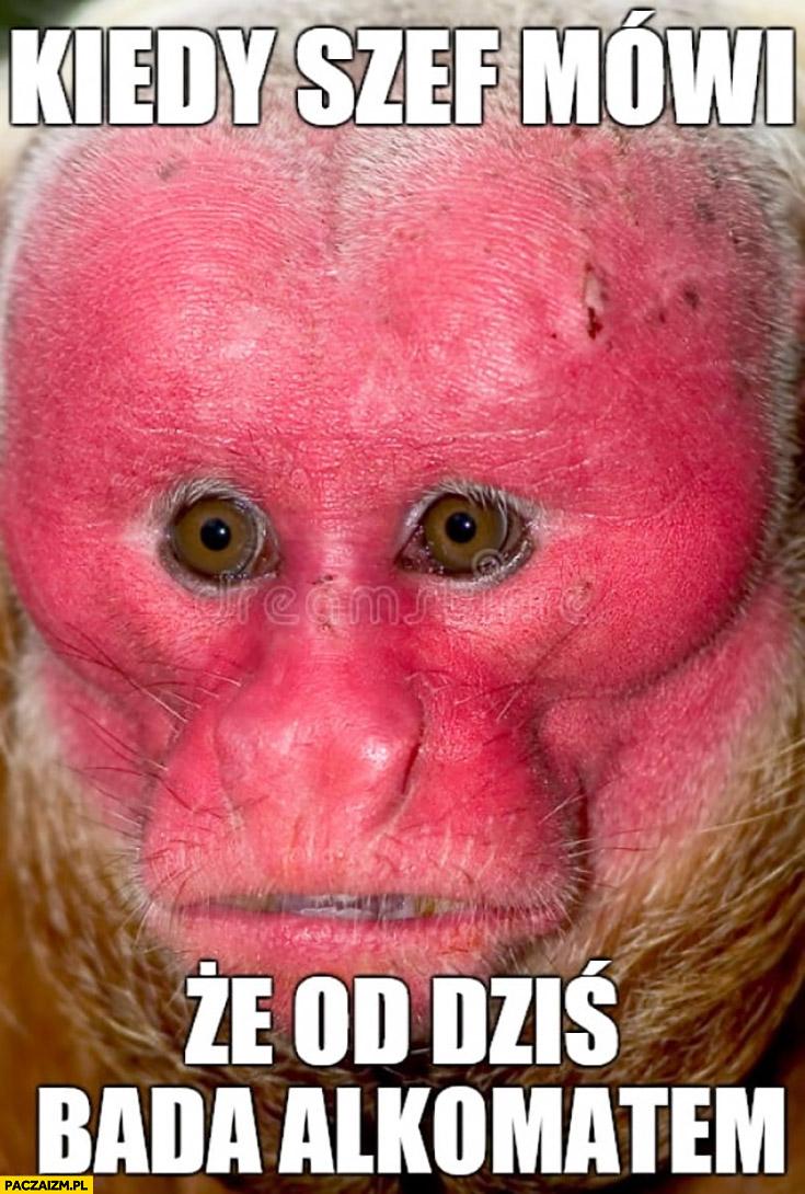 Kiedy szef mówi, że od dziś bada alkomatem typowa małpa Ukrainiec