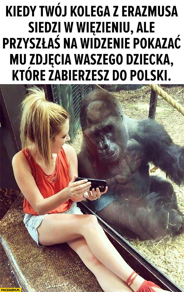 Kiedy Twój kolega z Erazmusa siedzi w więzieniu, ale przyszłaś na widzenie pokazać mu zdjęcie waszego dziecka, które zabierzesz do Polski małpa goryl