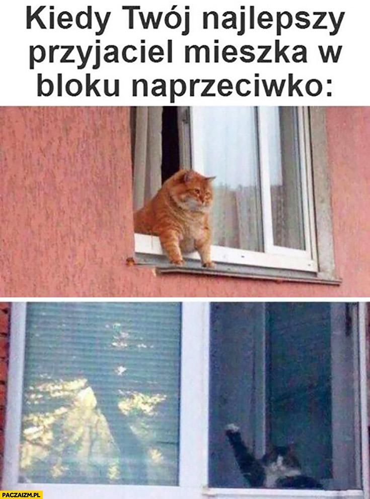 Kiedy Twój najlepszy przyjaciel mieszka w bloku naprzeciwko koty w oknie