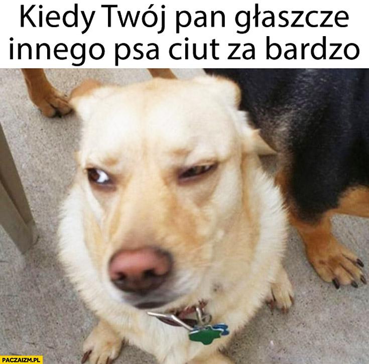 Kiedy Twój pan głaszcze innego psa ciut za bardzo zez