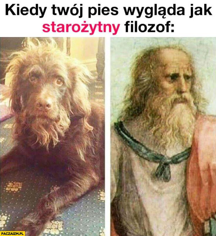 Kiedy Twój pies wygląda jak starożytny filozof