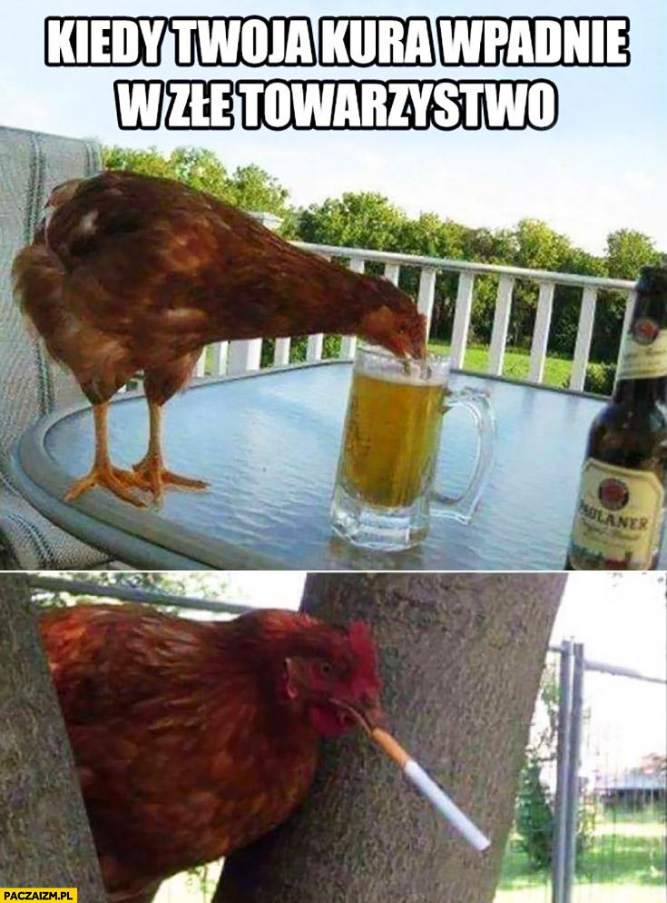 Kiedy Twoja kura wpadnie w złe towarzystwo pije piwo pali papierosy