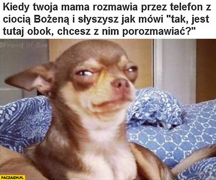 """Kiedy Twoja mama rozmawia przez telefon z ciocią Bożeną i słyszysz jak mówi """"tak jest tutaj obok, chcesz z nim porozmawiać?"""" pies piesek"""