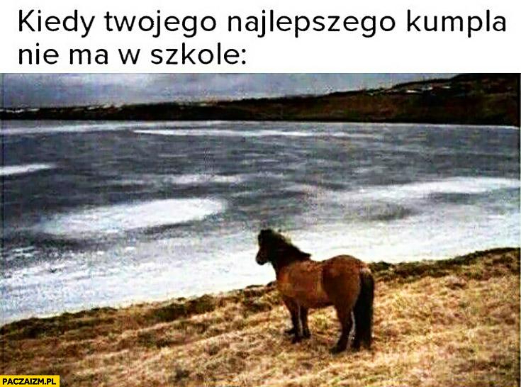 Kiedy Twojego najlepszego kumpla nie ma w szkole smutny koń patrzy w morze na wodę