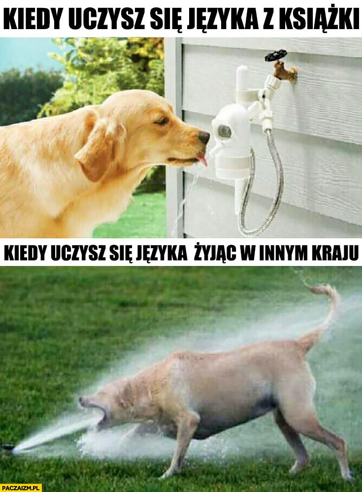 Kiedy uczysz się języka z książki pies pije wodę, kiedy uczysz się języka żyjąc w innym kraju woda ze szlaucha