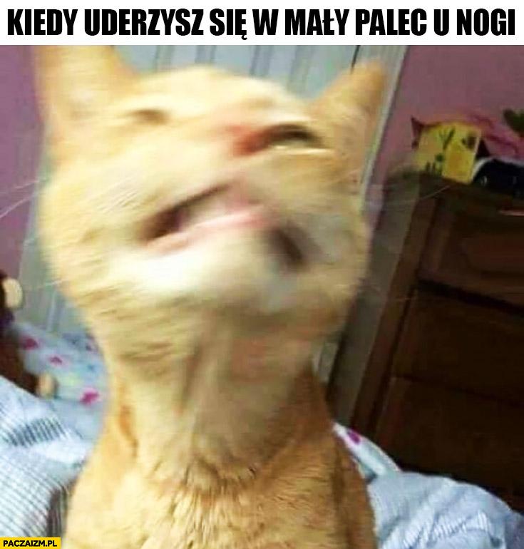 Kiedy uderzysz się w mały palec u nogi kot dziwna mina