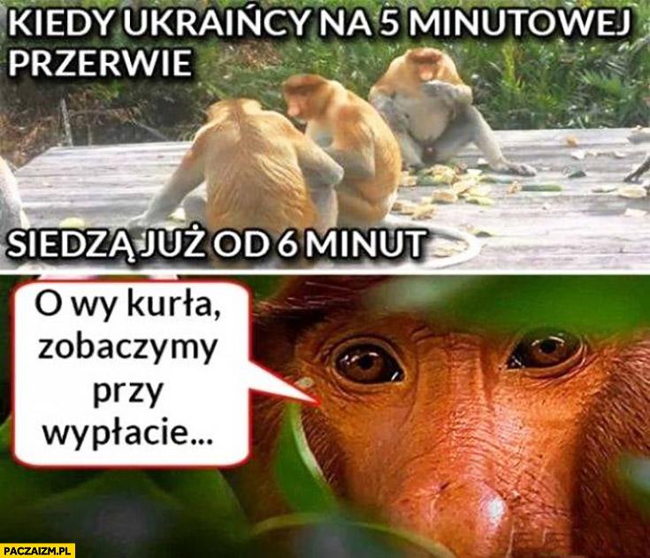 Kiedy Ukraińcy na 5 minutowej przerwie siedzą już 6 minut, o wy kurła zobaczymy przy wypłacie typowy Polak nosacz małpa