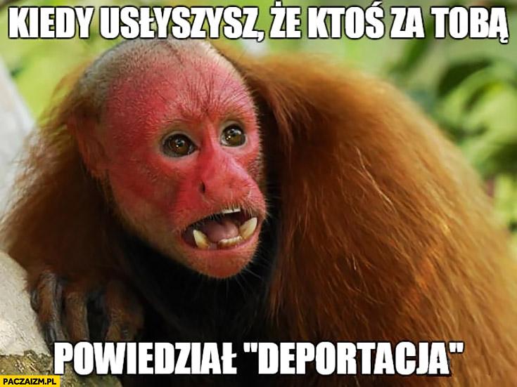 Kiedy usłyszysz, że ktoś za Tobą powiedział deportacja typowy Ukrainiec małpa