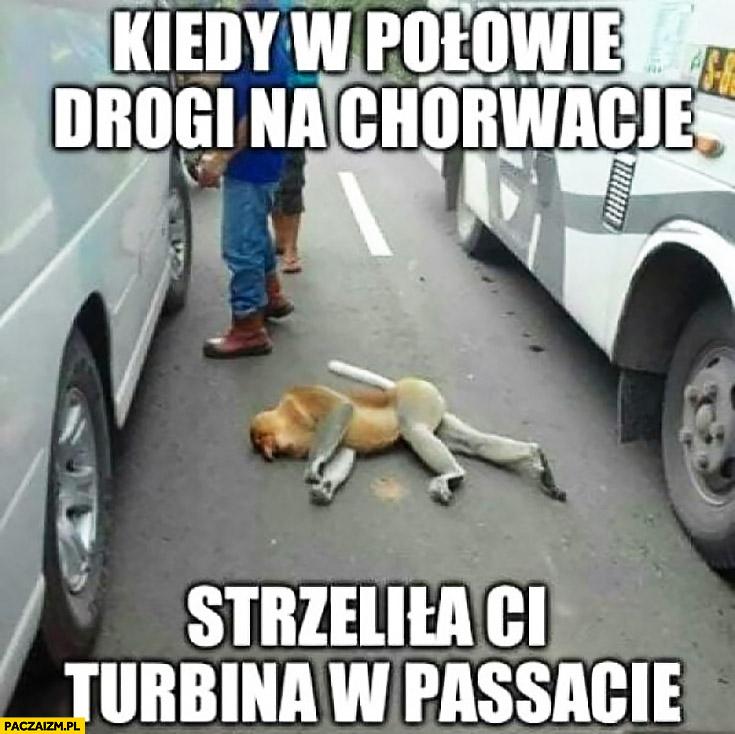 Kiedy w połowie drogi na Chorwację strzeliła Ci turbina w Passacie typowy Polak nosacz małpa